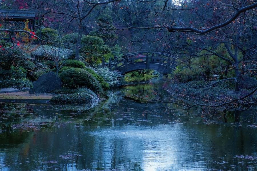 Peacock Photograph - Peaceful Garden by Peyton Vaughn
