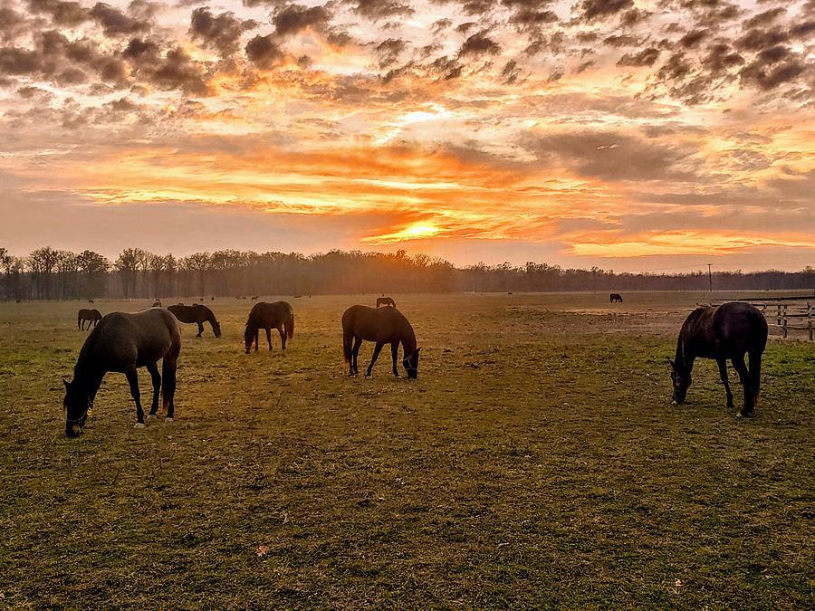 Peaceful Pastures  by Paul Kercher