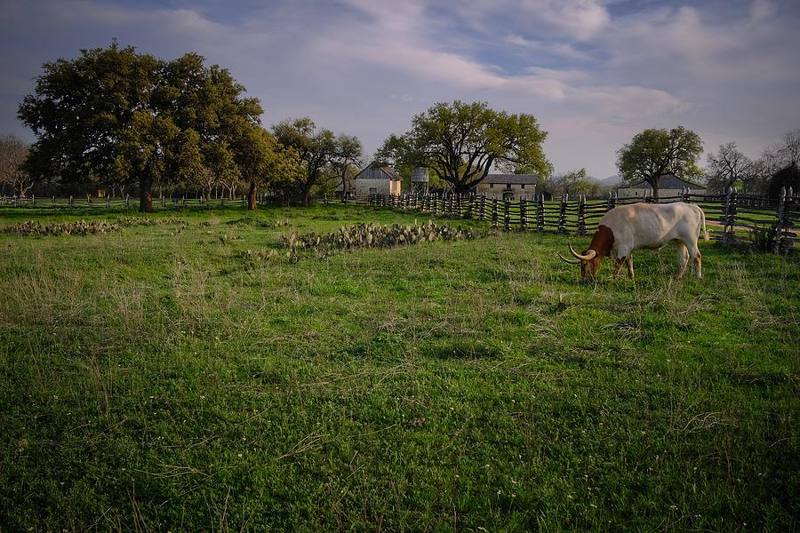 Peacefully Grazing Photograph