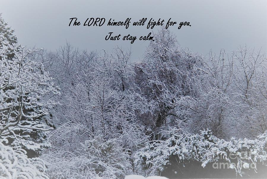 Peacefulness Of Snow by Karen Silvestri