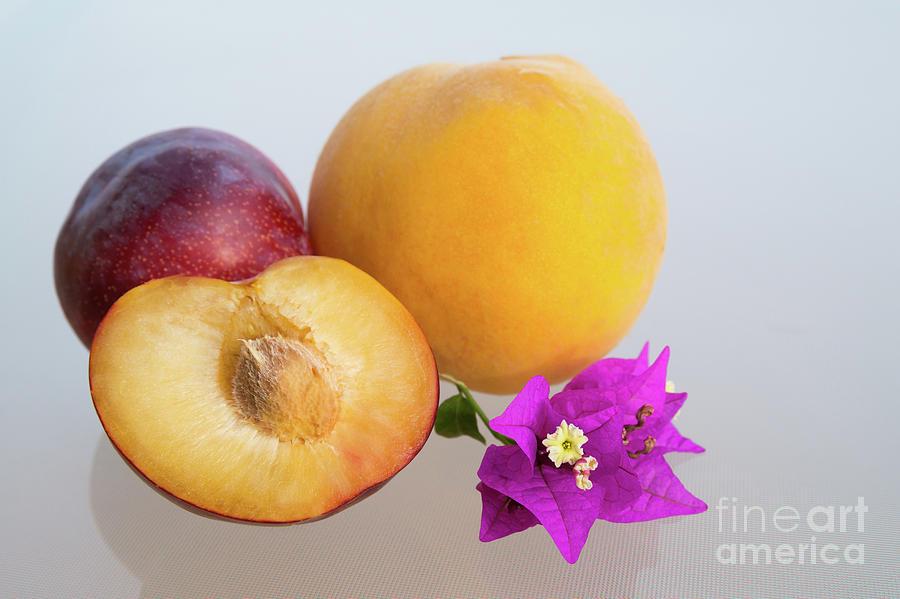 Peach And Plum In The Mediterranean Sunlight Photograph