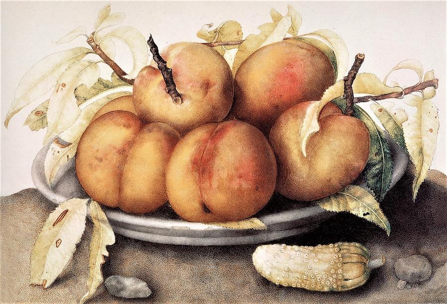 Peaches  Still Life Painting