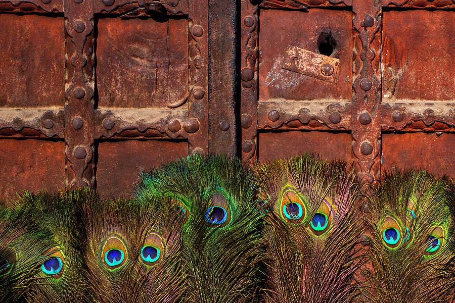 Minimalism Photograph - Peacock Feathers  by Prakash Ghai