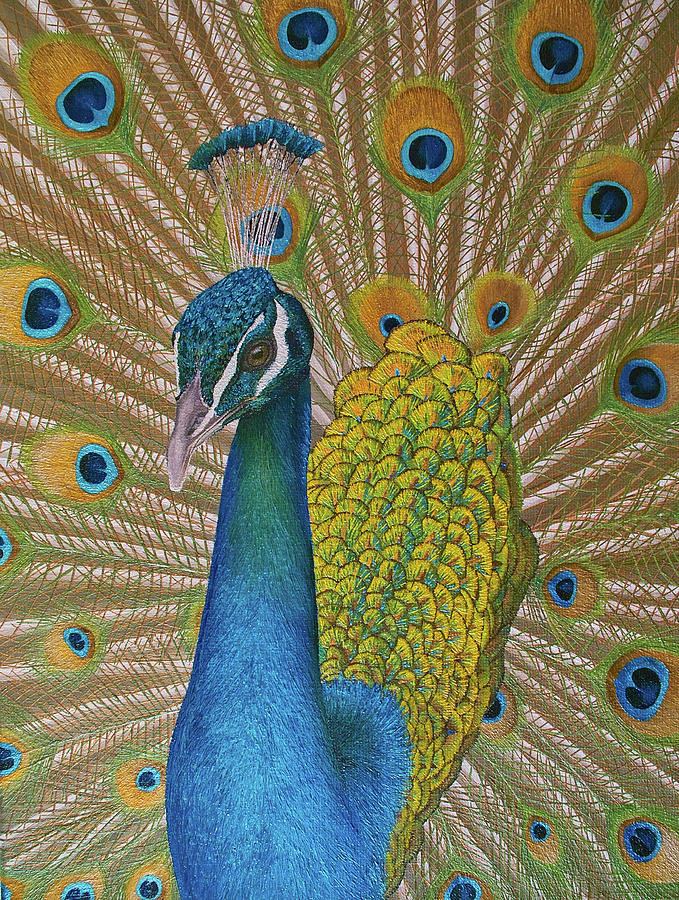 Peacock Painting - Magnificent peacock by Russell Hinckley
