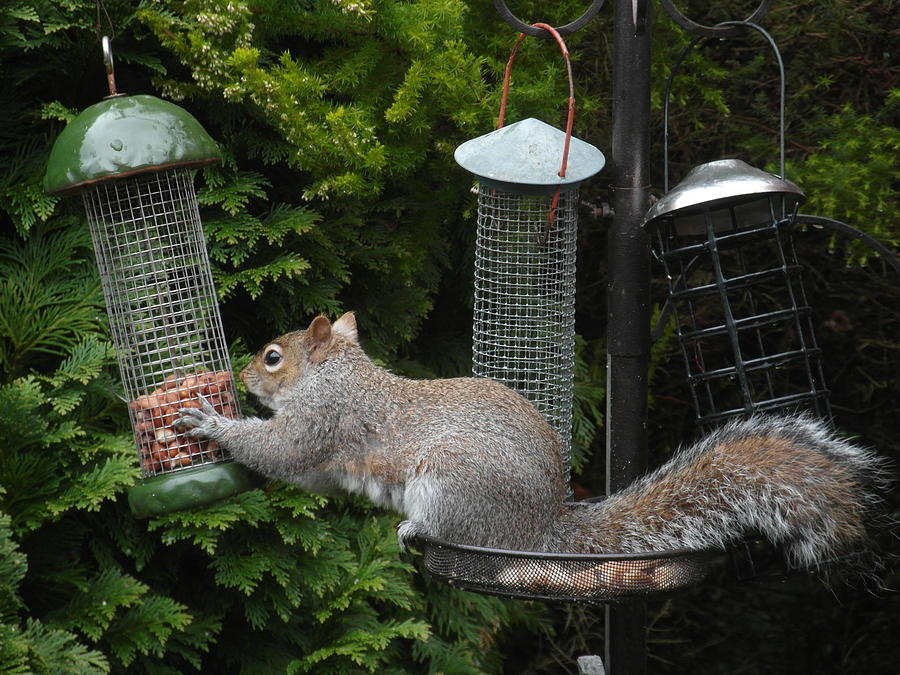 Peanuts attract. by Val Byrne