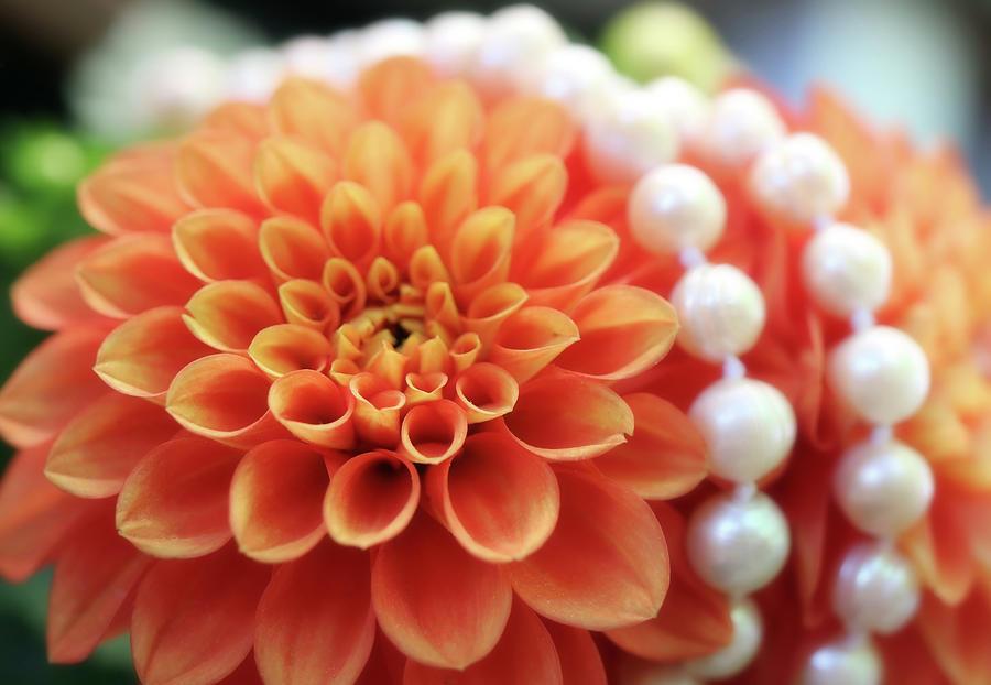 Pearls Around The Orange Dahlia Photograph