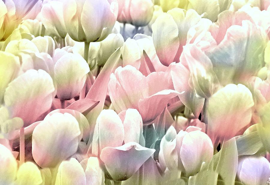 Pearly Pastels by Diana Angstadt