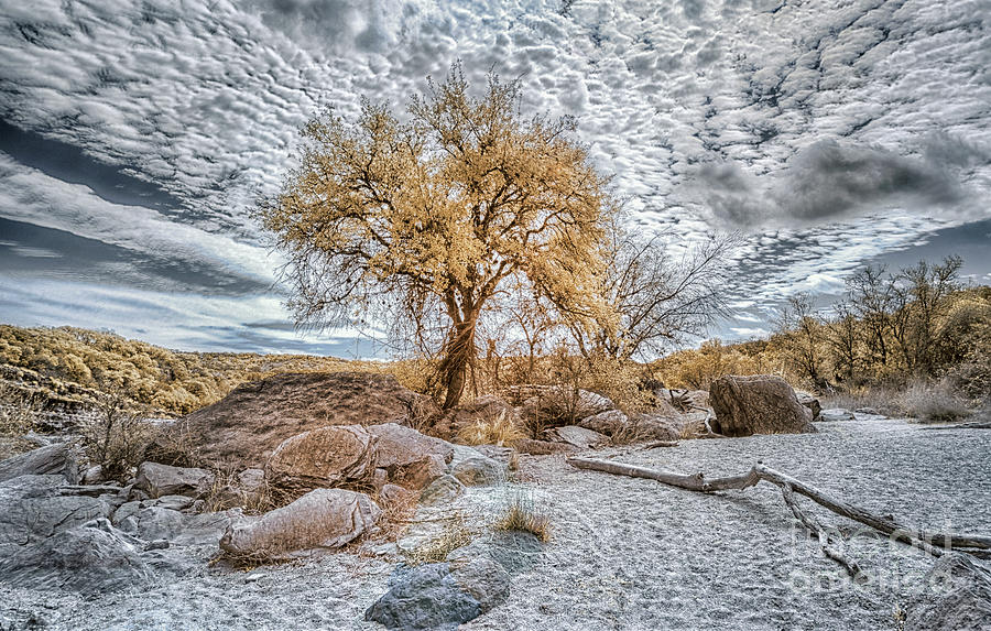Pedernales River Bed In Infrared Photograph