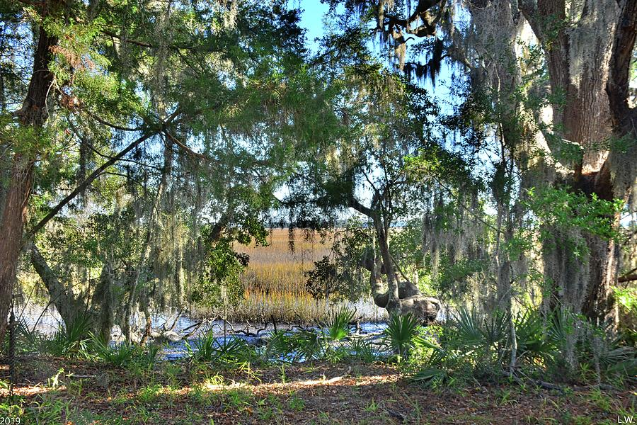 Peek A Boo View Of The Marsh by Lisa Wooten