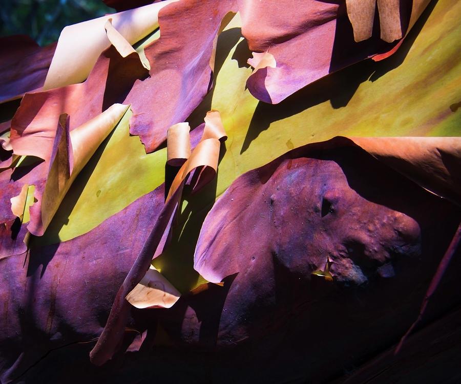 Peeling Madrona Bark by Yulia Kazansky