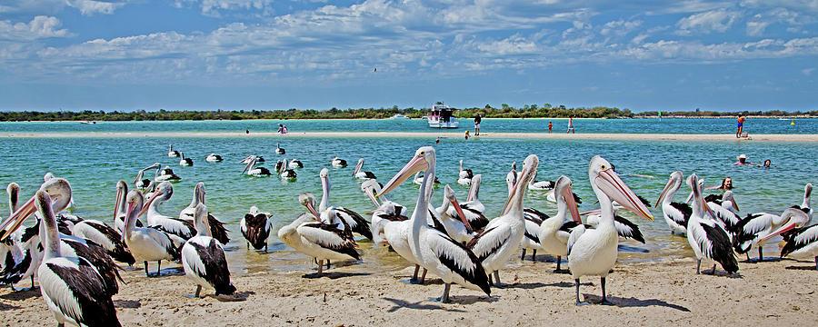 Pelican Party Photograph