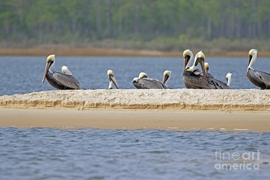 Pelican Pier by Banyan Ranch Studios