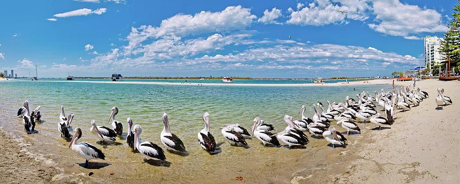 Pelican Shores Photograph