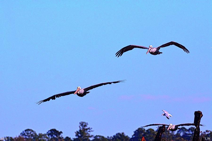 Pelicans In Flight by Lisa Wooten