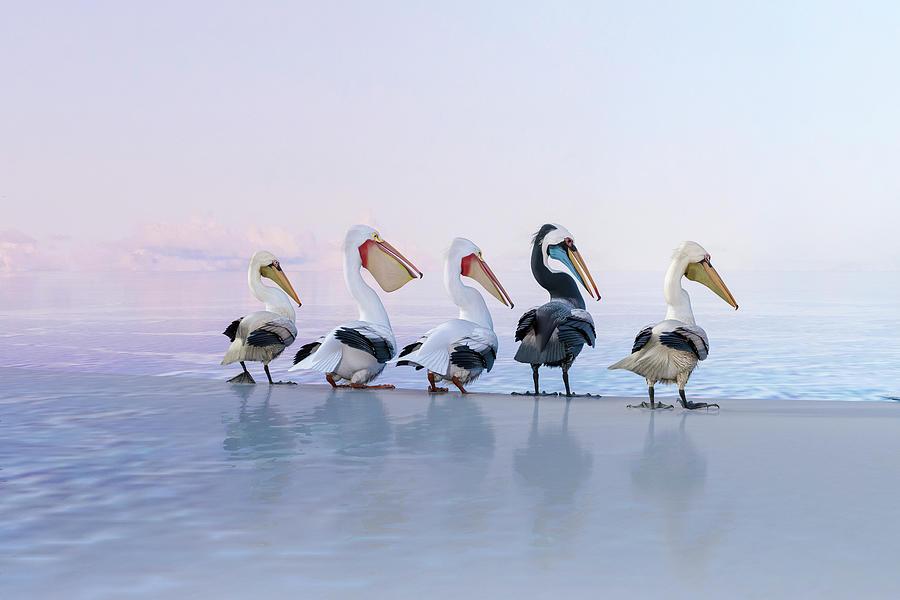 Pelicans Perfect Coastal Morning Digital Art