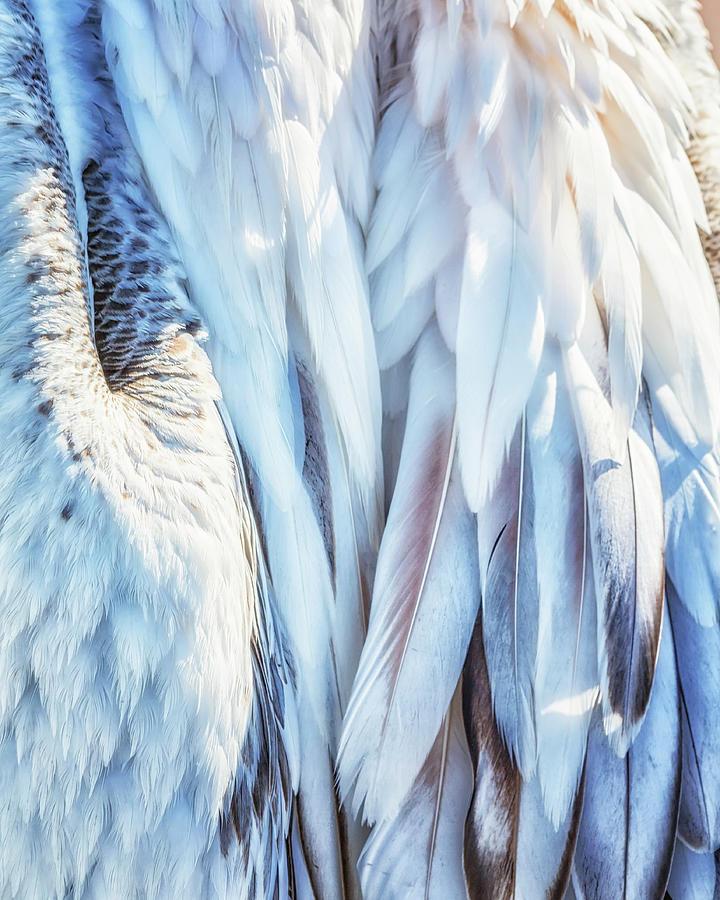 Pelican's Plumage by Belinda Greb