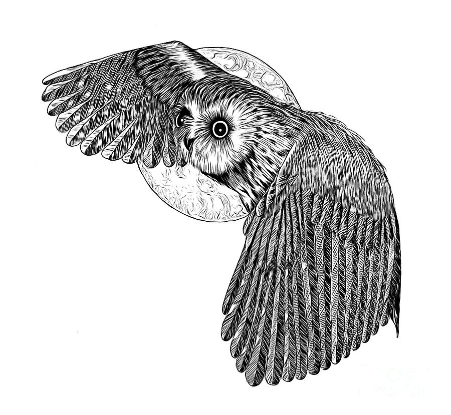 Pen And Ink Owl And Moon Drawing Abstract Expressionist Effect Drawing
