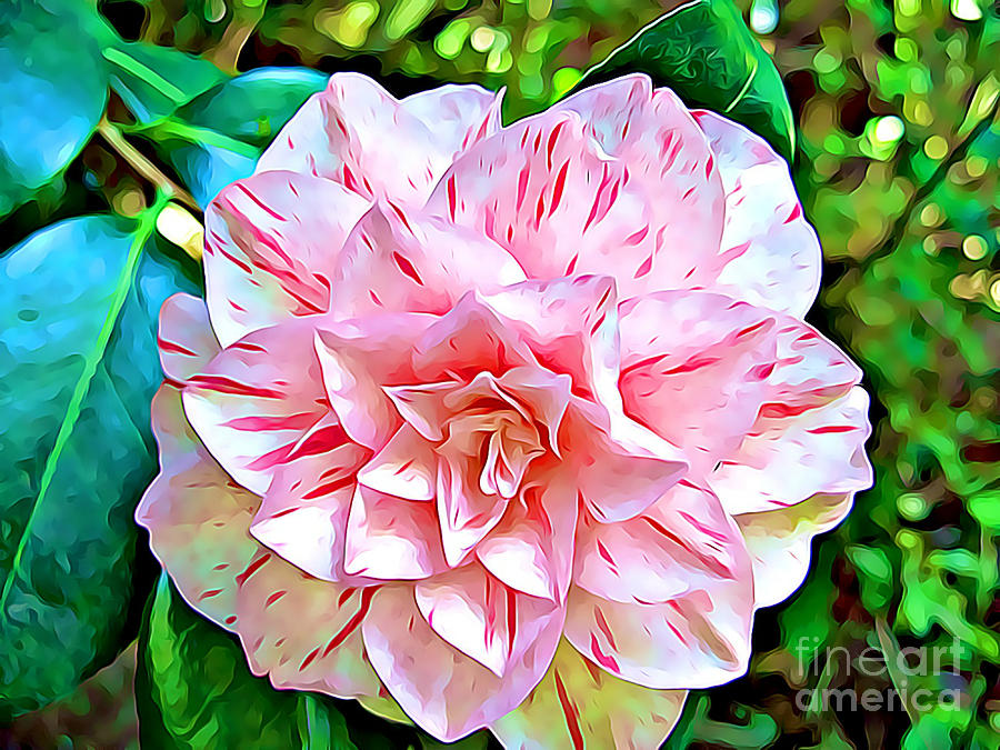 Peppermint Rose by Tracy Ruckman
