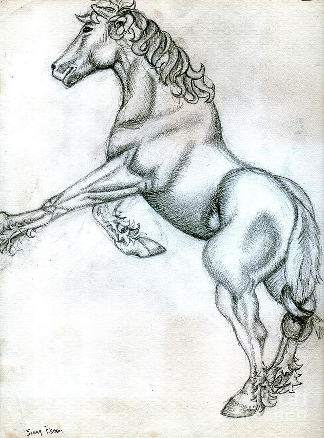 Percheron Horse Sketch Drawing