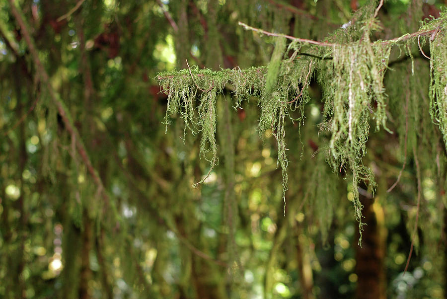 Perhaps Life. Olympic National Park Photograph