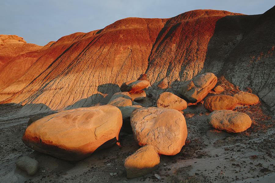 Petrified Forest at dusk Photograph by Mint Images