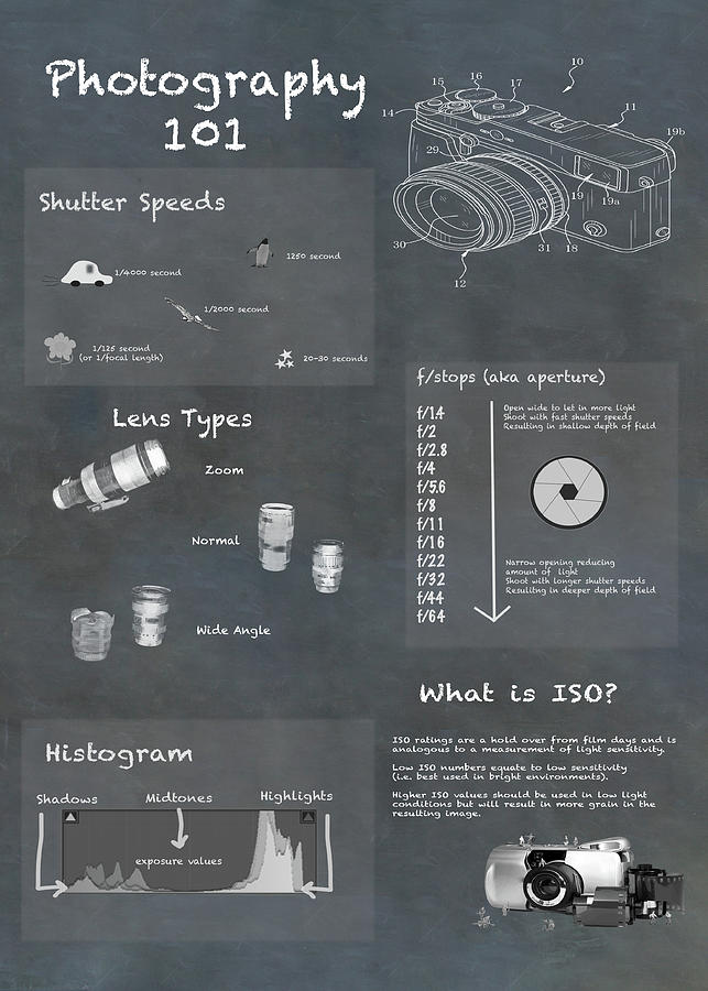 Photography Infographic Diagram Photograph