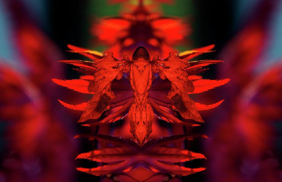 Phyllium Guardian 2 Digital Art