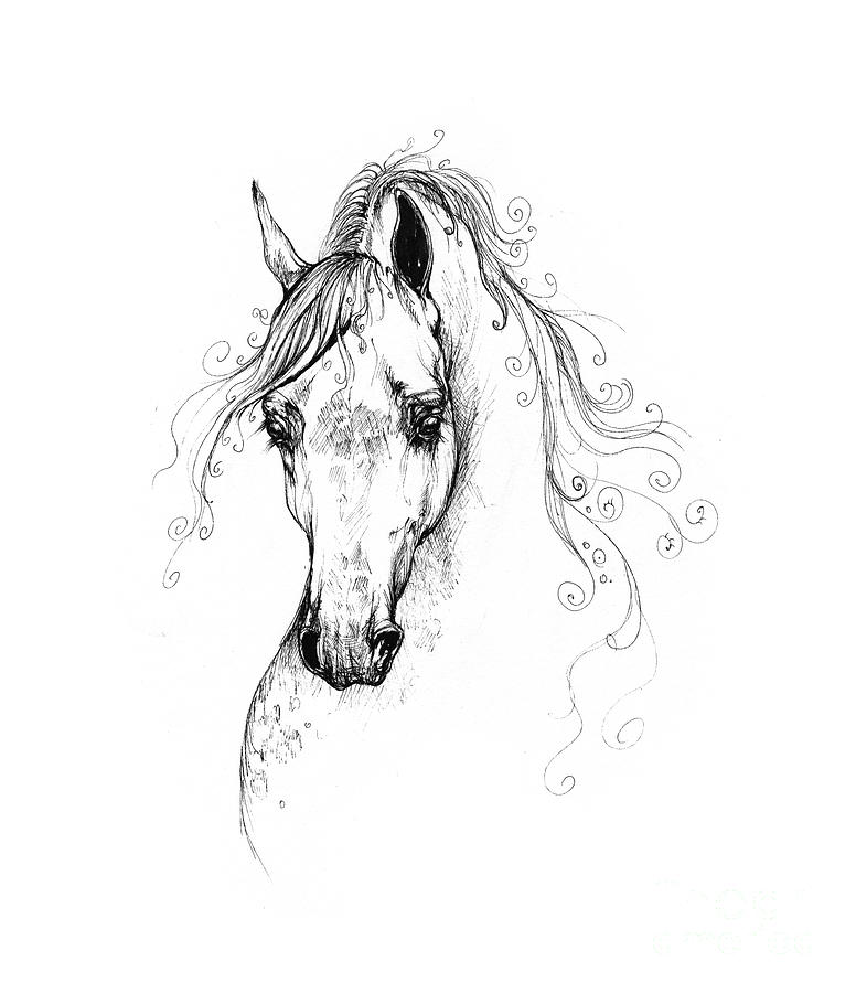 Piaff Polish Arabian Horse Drawing Drawing