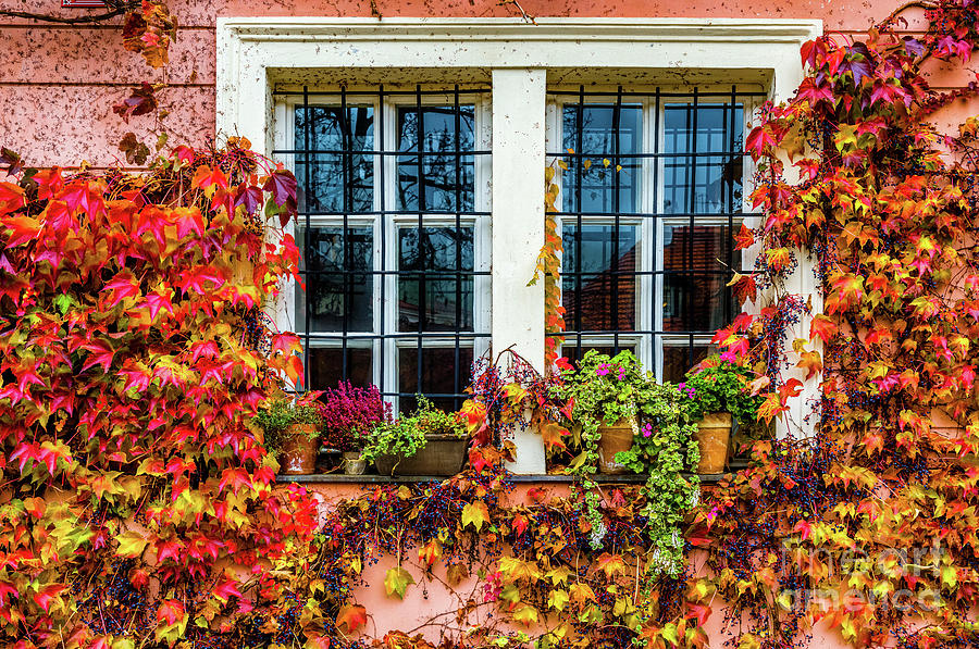 Picturesque Window 1 by Miles Whittingham