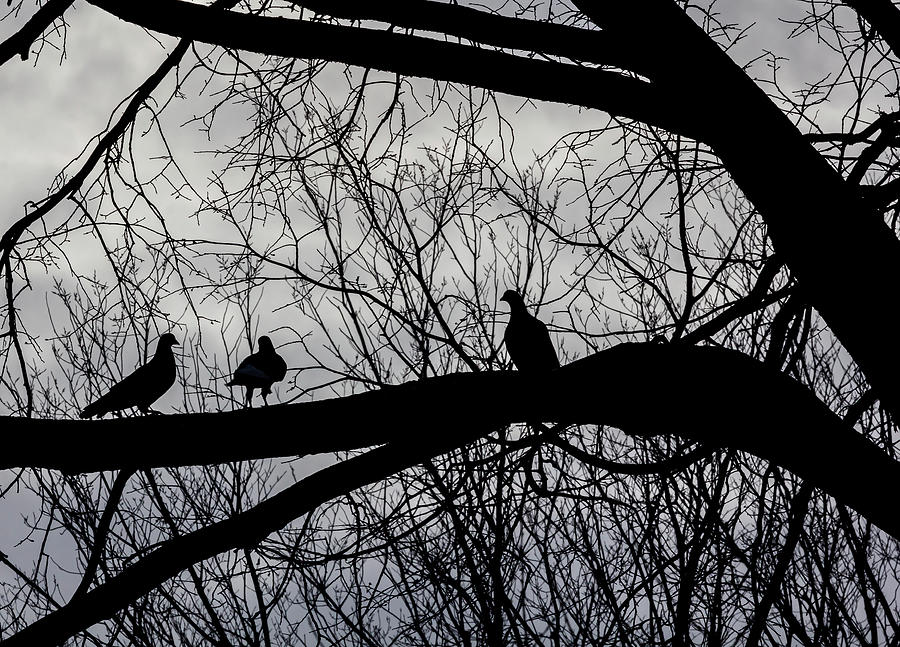 Pigeons and Winter Trees by Robert Ullmann