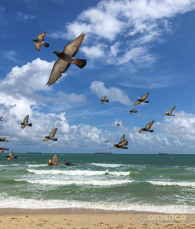 Pigeons at the beach by Barry Bohn