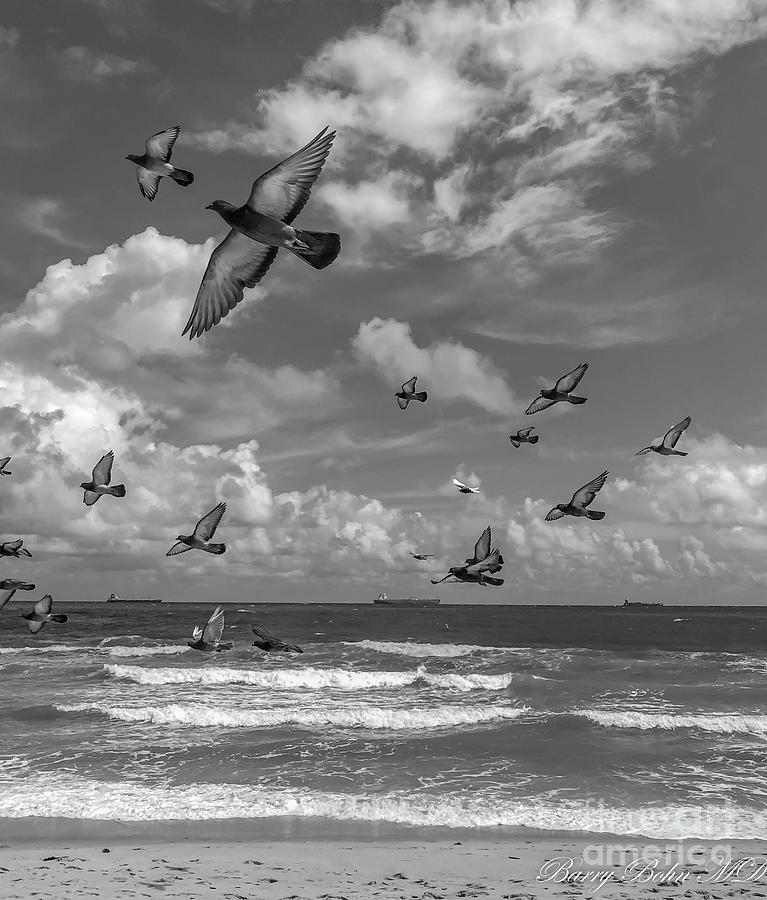 Pigeons at the beach BW by Barry Bohn