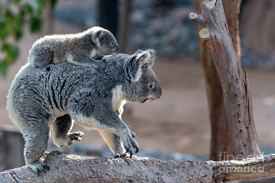 Piggy Back Rides by David Levin