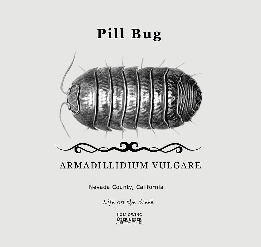 Pill Bug by Lisa Redfern