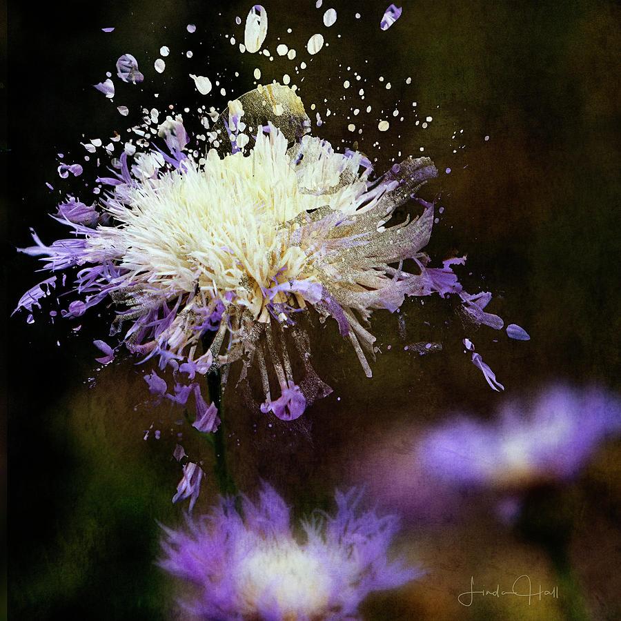 Purple Digital Art - Pincushion Flower by Linda Lee Hall