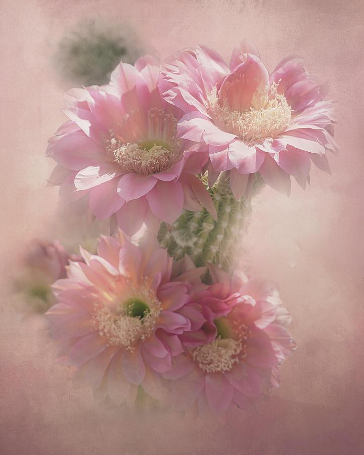 Pink Blooms of Tucson by Steve Kelley