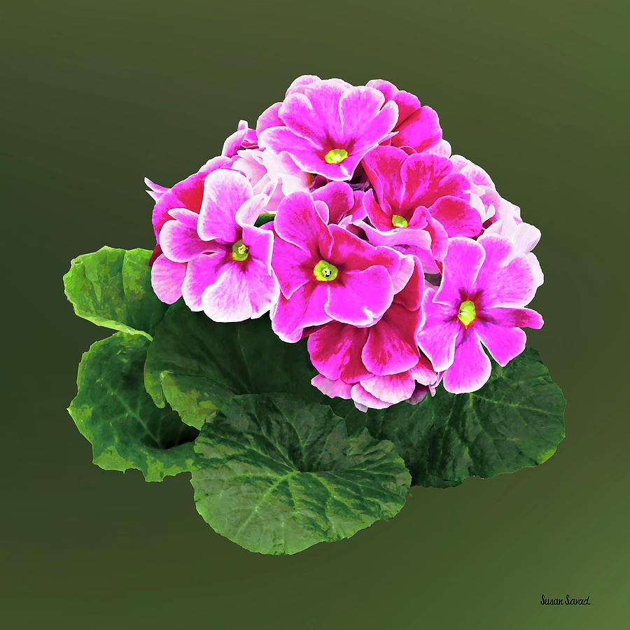 Pink Geranium Cluster by Susan Savad