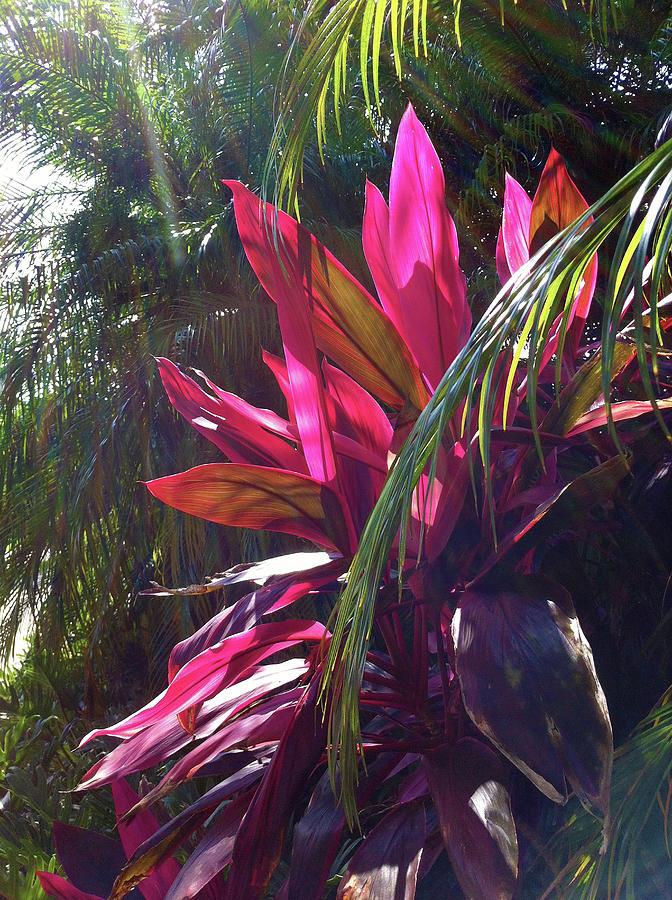 Pink Leaves and Palms Photograph by Karen Zuk Rosenblatt