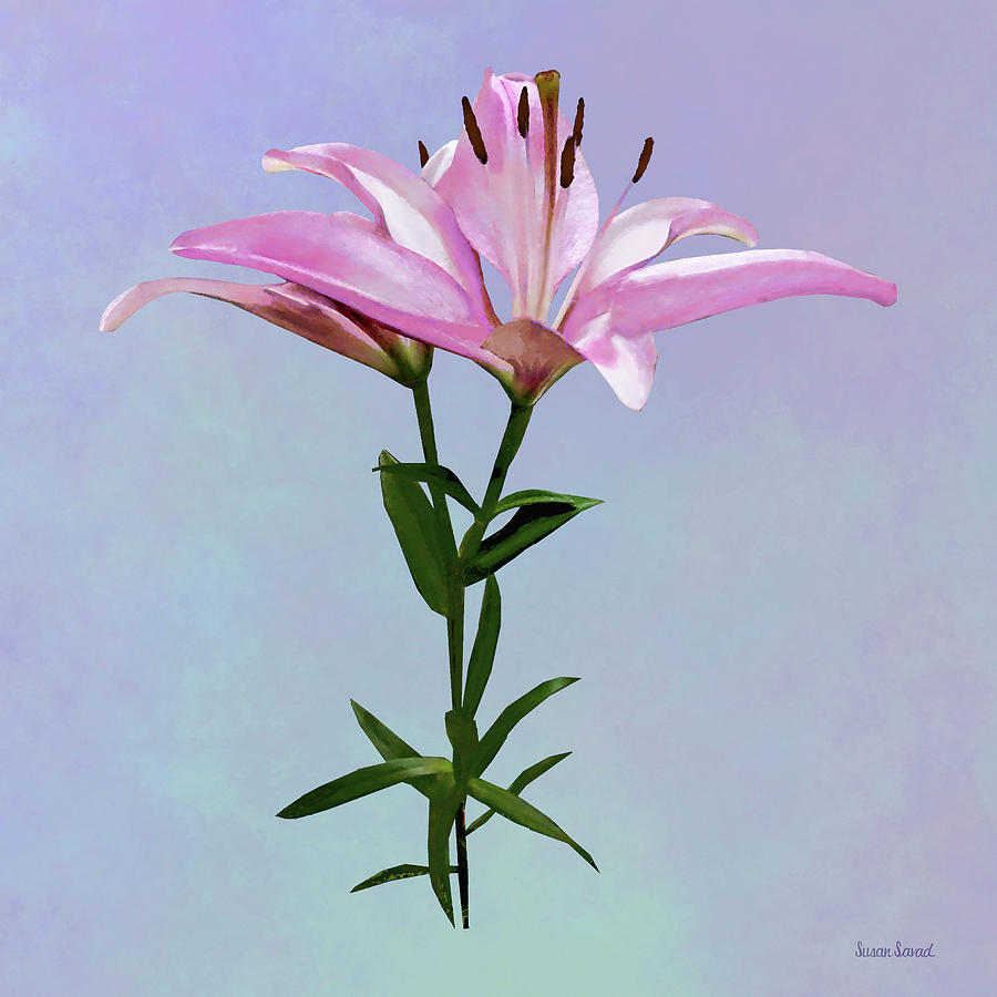 Pink Lily Pair by Susan Savad