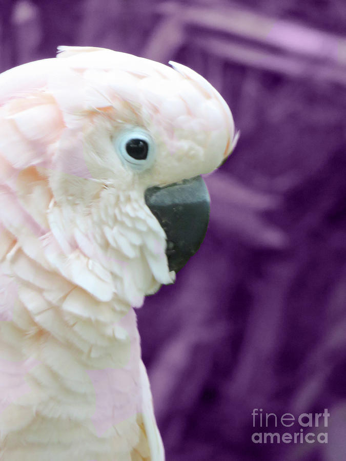 Bird Photograph - Pink Parrot by Mary Mikawoz