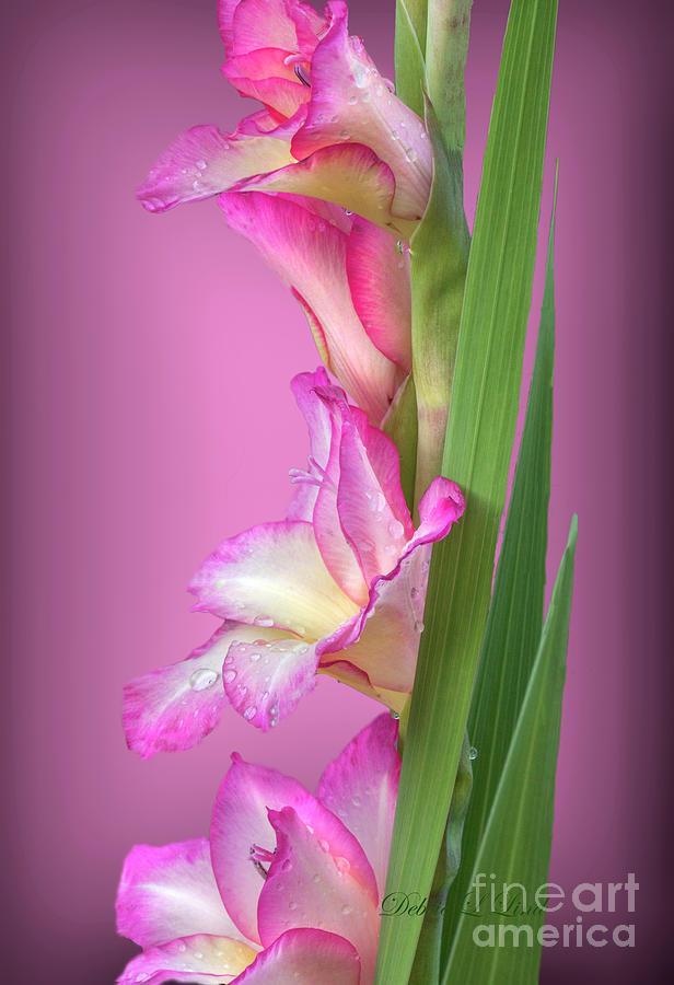 Pink Princess Photograph