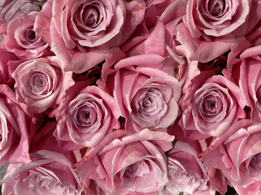 Pink Roses Photograph by Karen Zuk Rosenblatt