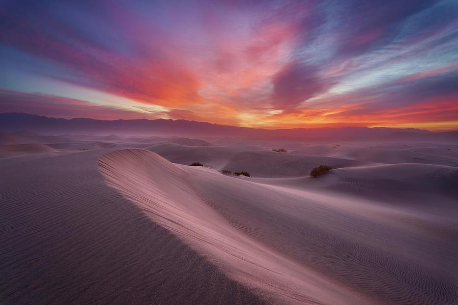 Pink Sky, Pink Dunes Photograph