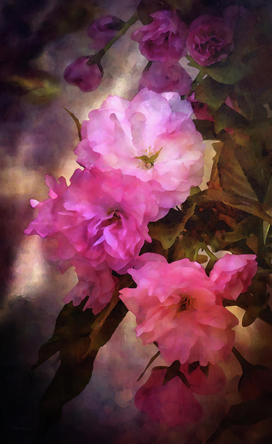 Pink Spring 6421 IDP_2 by Steven Ward