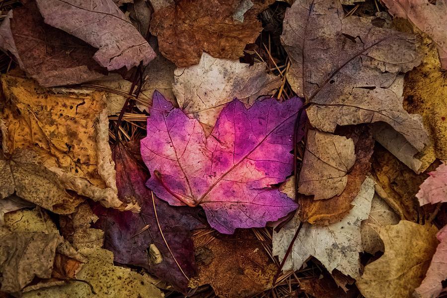 Pink by Terri Hart-Ellis