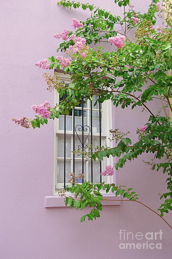 Savannah Ga Photograph - Pink Window Framing by Linda Covino