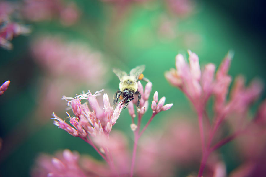 Pinky and the Bee by Stacy Abbott