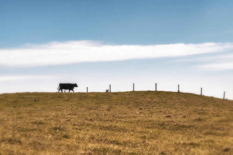 Places To Go, Grass To Eat Photograph
