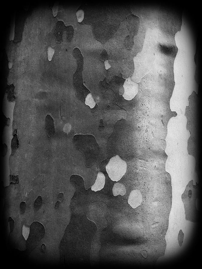 Plane Tree Photograph - Plane Tree Bark by Jussi Laasonen