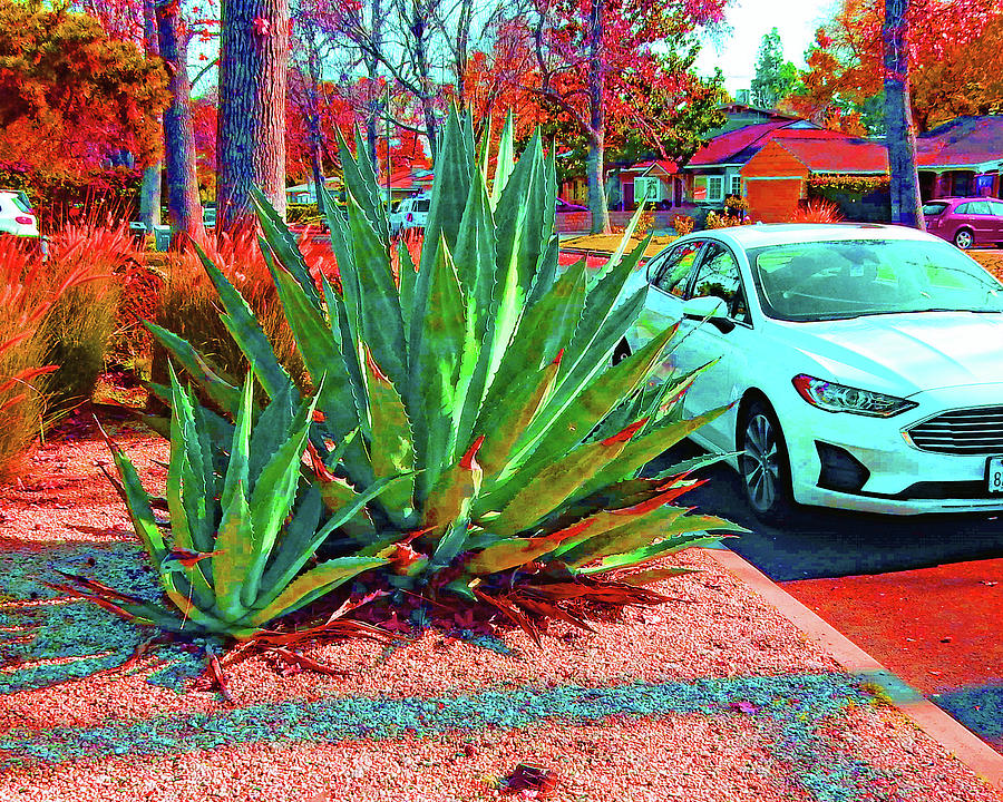 Plant Bigger Than A Car by Andrew Lawrence